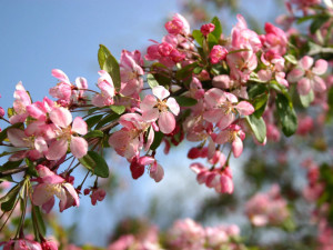 Цветочный вернисаж - слайд 4